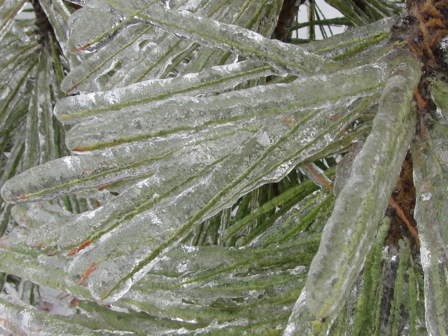 Gorge Ice Storm Update: More Damaging Ice Through Tonight