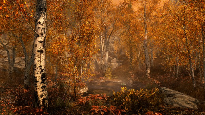 Skyrim Fall Forest