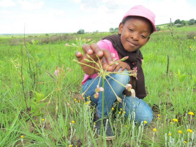 samkelisiwe-admires-pelargonium-luridium-by-nkululeko-mdladla-res