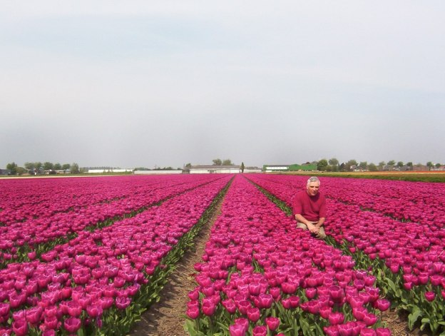 Bob in a field of tulips near Lisse in the Netherlands