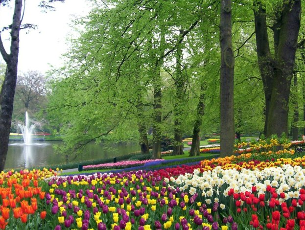 Multi-colored tulip beds beside a pond at Keukenhof Gardens in the Netherlands.