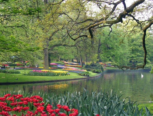 Tulip beds beside a larger pond at Keukenhof Gardens in the Netherlands.