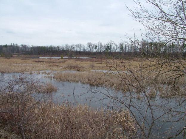 grass lake near cambridge ontario