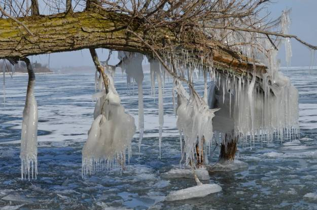 ice coated shoreline and trees, lake ontario, ontario, canada, 7
