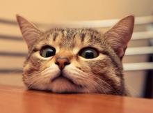 funny-cat-photo