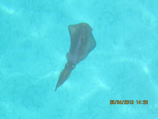 Friendly Squid
