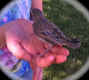 Amber and Baby Bird