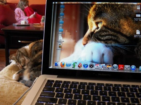My Favorite Lizzie Cat