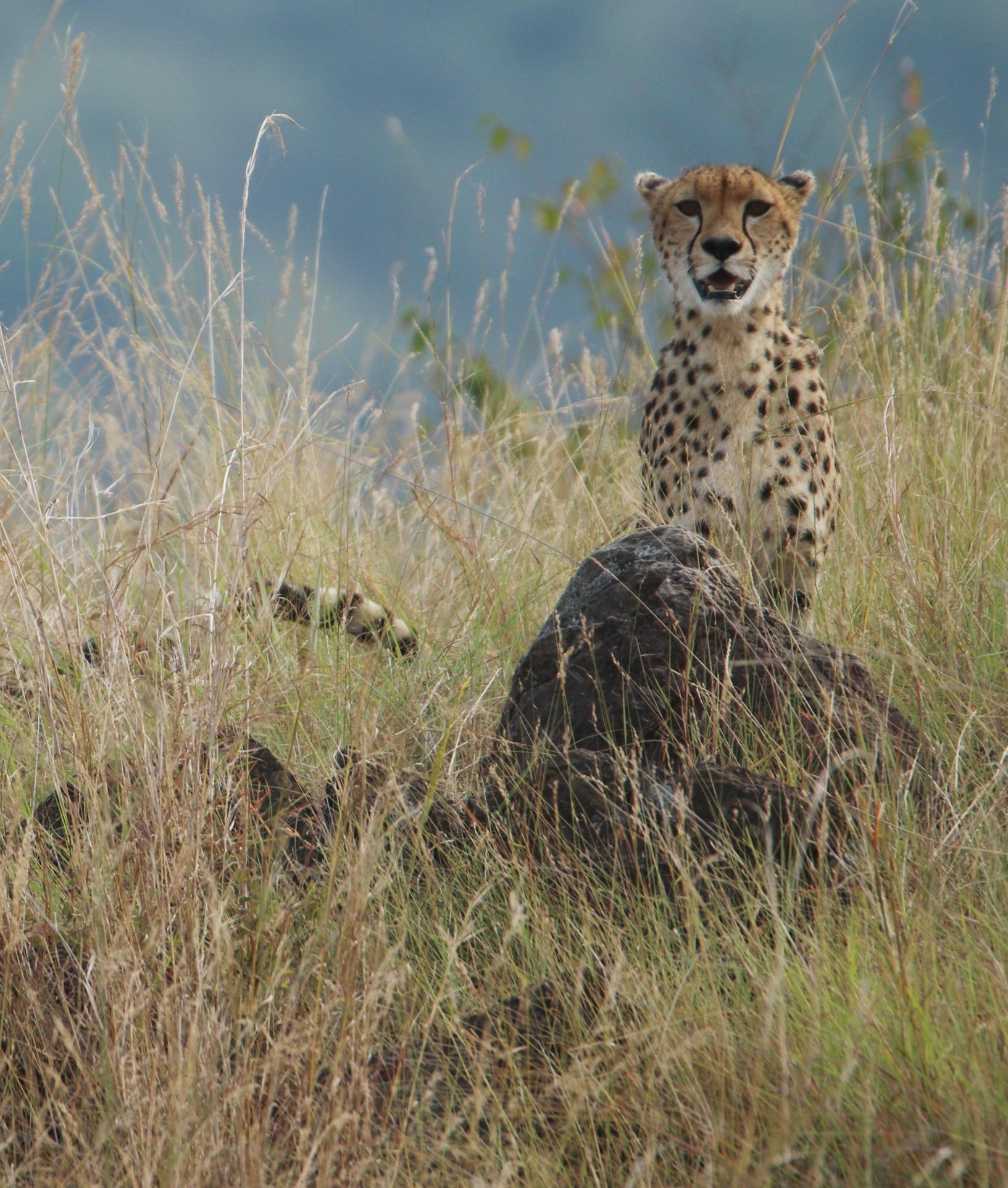 Kenya July 2016