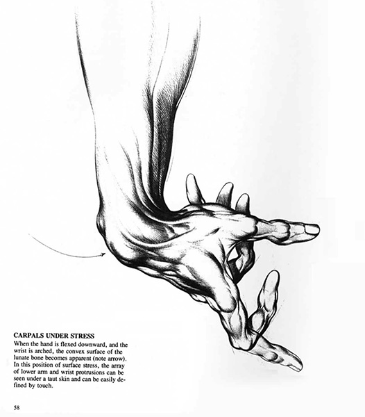 "Burne Hogarth, illustration from ""Drawing Dynamic Hands"", 1977"