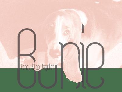 Bonie Free Typeface