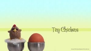 Free tiny chicken desktop wallpaper