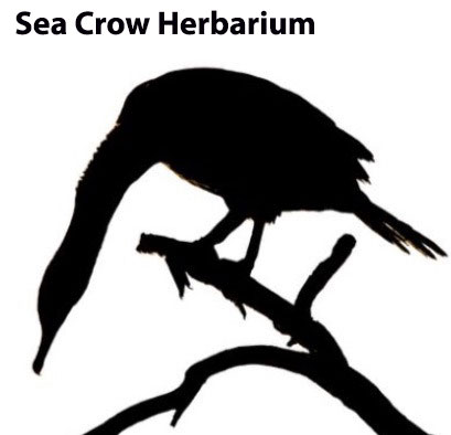 sea-crow-herbarium