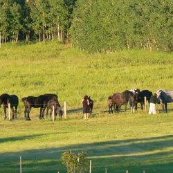 mount saint francis horses