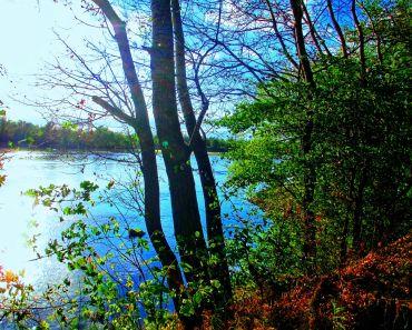 AUTUM PICTURES: Beautiful landscape - autumn river and forest-2516x1861