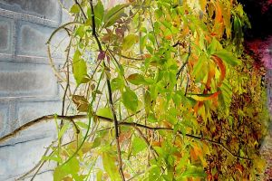 FreePhotosForCommercialUse.com-free-image-free-use-images-of-leaves-autumn-leaves-green-HDR-1200x1600