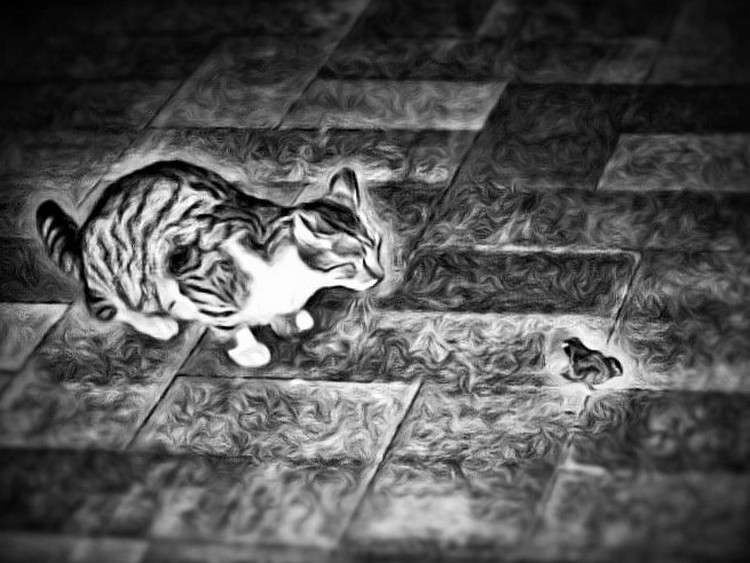 FreePhotosForCommercialUse.com-mouse-and-cat-amazing-meeting-at-night-black-and-white