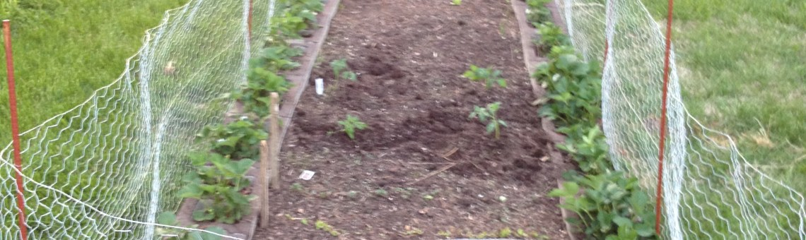 How to make your own raised garden bed
