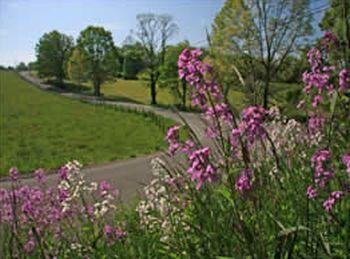 West Virginia 2015 Roadsides in Bloom Calendar - US