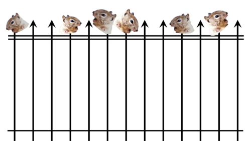 squirrelfence