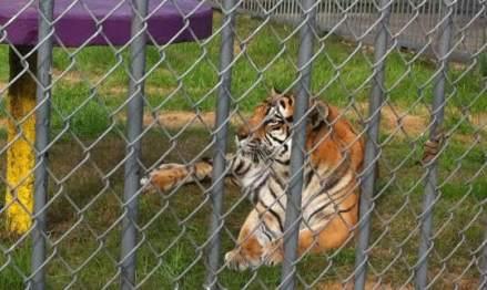 Free Tony The Tiger