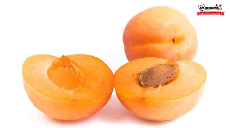 Large Of Can Dogs Eat Apricots