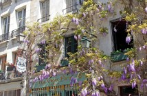 Our Instagram profile has gone berserk with wisteria! © French Moments