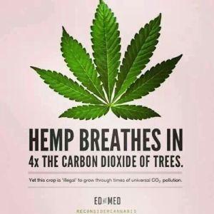Hemp Breathes