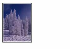 FC 048 snowy trees