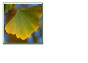 FC 053 Ginko leaf