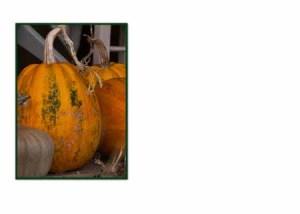 FC 508 NZ pumpkins