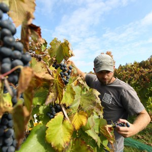 Jordan Kittredge - Vineyard Manager