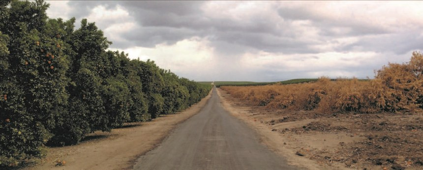 Contrasting conditions in adjoining orange groves in which irrigation has been possible and where water is not available are in-creasingly evident in Friant Division dis-tricts along the foothills where many irri-gated farms are totally dependent upon surface water due to a lack of groundwater. With no Friant water allocation available, many trees are likely to be doomed. Some groves are already being pulled out.