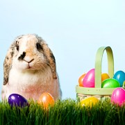 Plastic Eggs - iStock