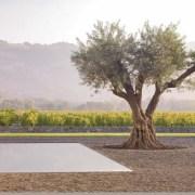 Andrea Cochran Garden