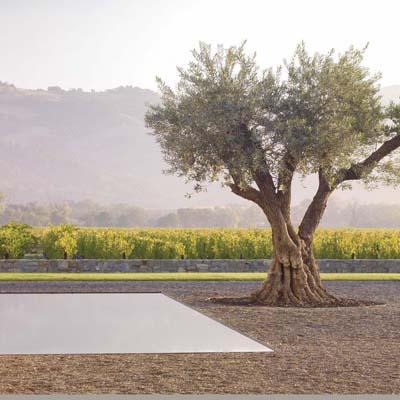 Andrea-Cochran-Garden