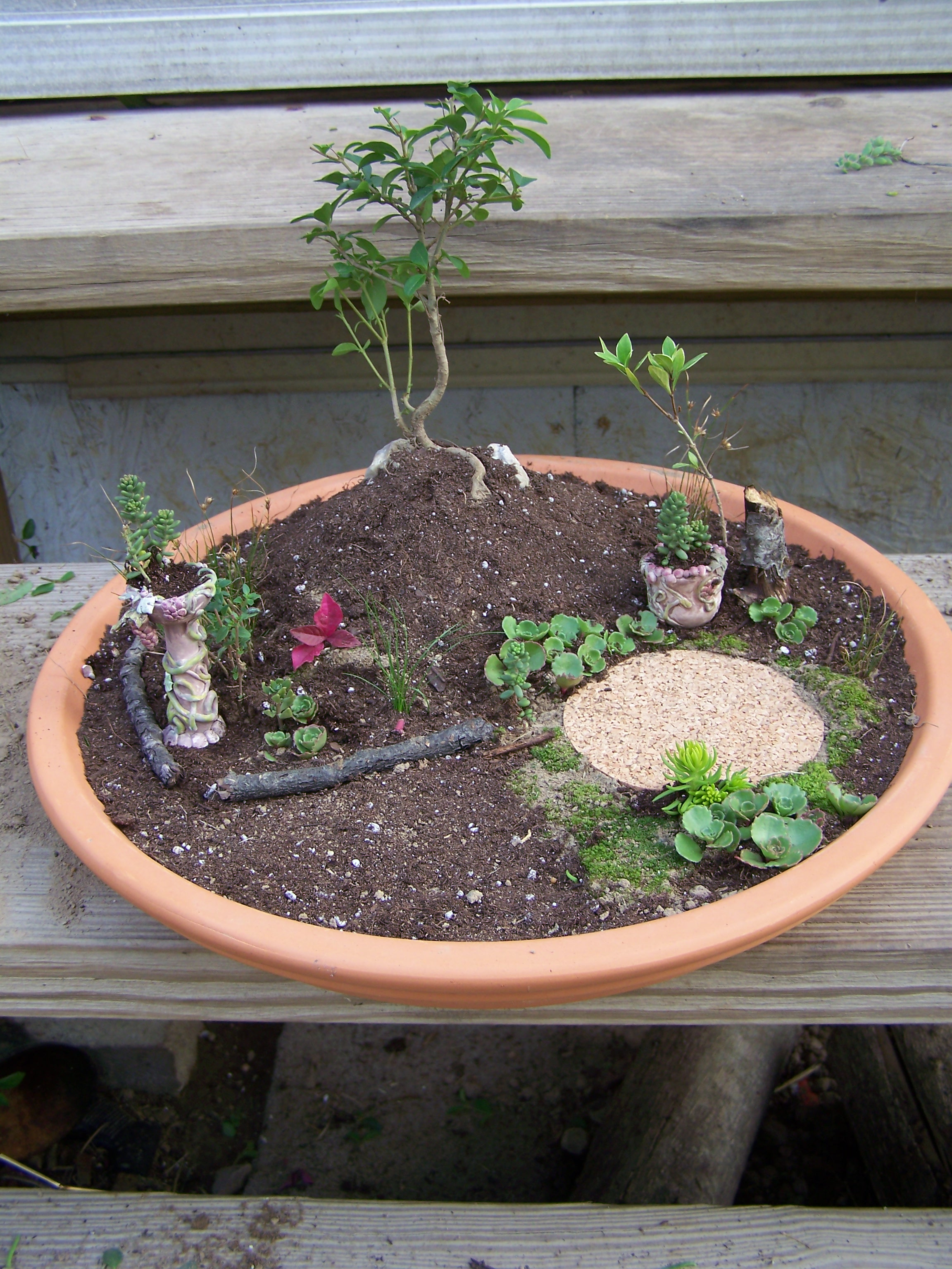 Marvelous Unfinished Miniature Fairy Garden How To Create A Miniature Fairy Garden Frugal Gardening Momma Miniature Fairy Garden Trees Miniature Fairy Garden Plants garden Miniature Fairy Garden
