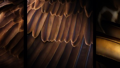 Osprey Feathers - Featured Image