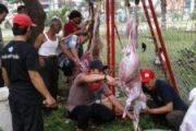 Acara Pemotongan Hewan Qurban di FTI Jayabaya