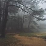 霧の中の幻想的な風景をiPhoneで撮影 (Shot On iPhone #2)
