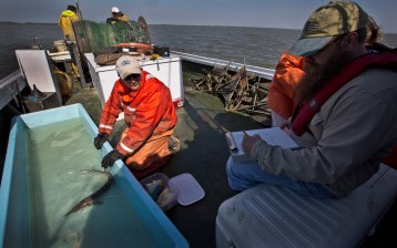 Patrick McGrath and Eric J. Hilton record data gathered from a sturgeon pulled from the James River on Tuesday.