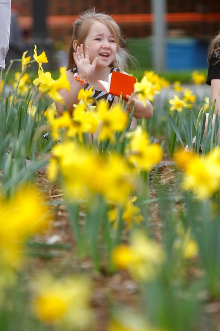 daffodilFestival4
