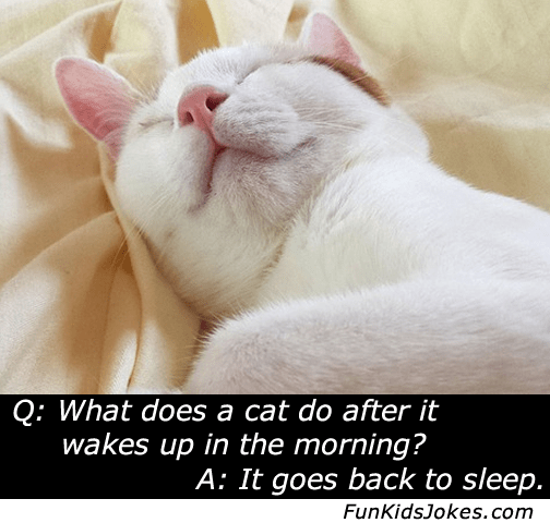 cat goes back to sleep after waking joke