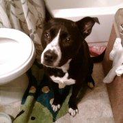 give a dog a bath
