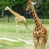 Jacksonville Zoo-small_7104337071
