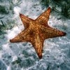 MARINAS-Brad Spry-Starfish-small_171728123