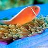 DIVING-Diver Ken2-small_379377179
