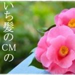 堀北真希「いち髪」CMのフランス語 その4