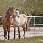 Marchador-Colts-Photo-Summer-Wind_4175