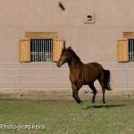 Summerwind_Marchador_horse_1808